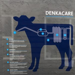 Display Denkacare
