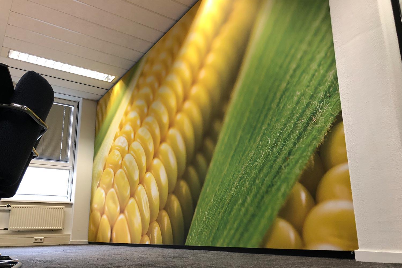 Spandoek binnen maïs